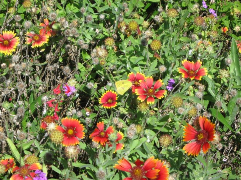 wildflowers 3